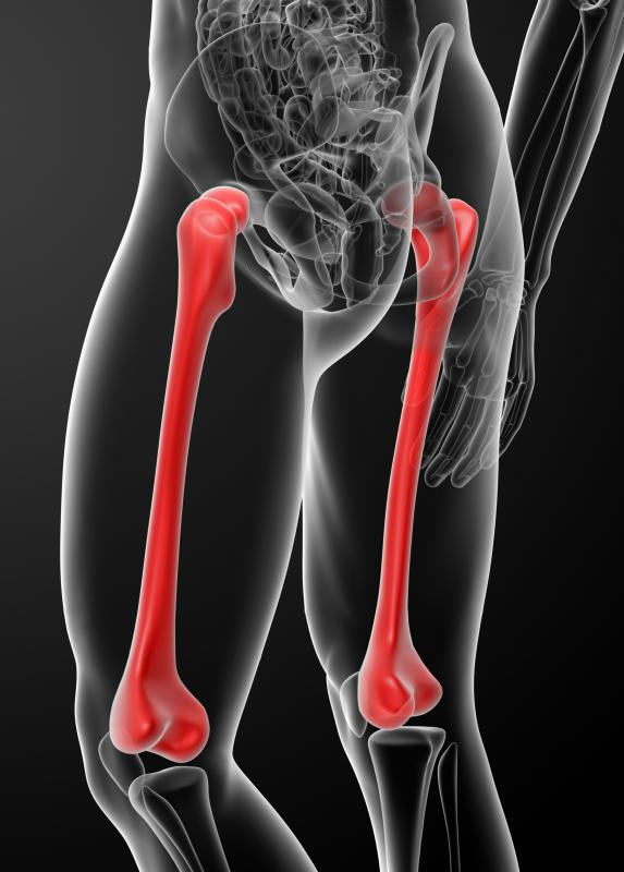 Bone marrow is found in many of the body's long bones, such as the femur.