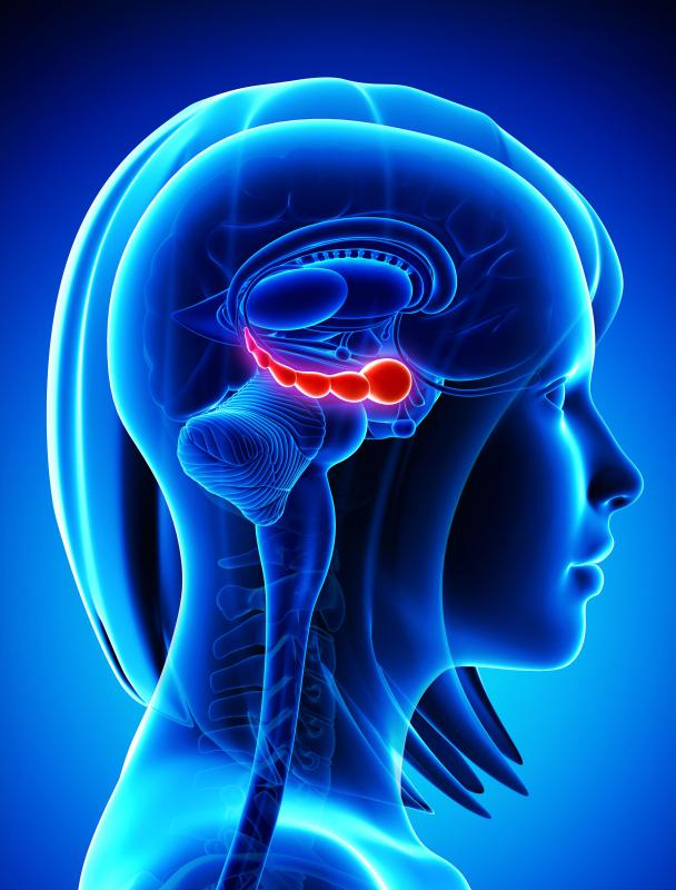 Studies show the hippocampus part of the brain may be up to 15% smaller in depressed individuals, but that exercise can stimulate that section of the brain.