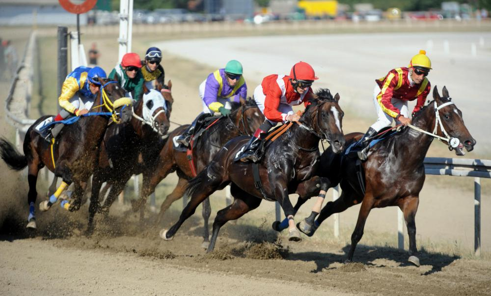 Horse racing can be brutal for mid-range horses that do not make it into the ranks of the champions.