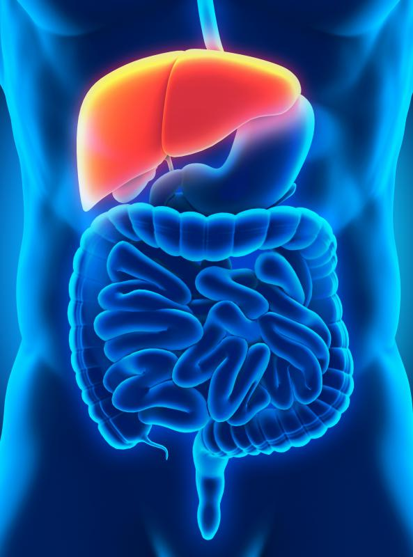 The liver is a vital organ that is an important source of body metabolism.