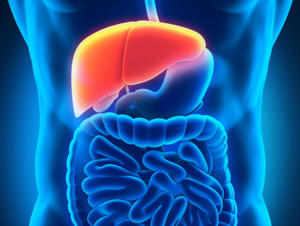 Hepatocytes are specialized cells found in the liver.