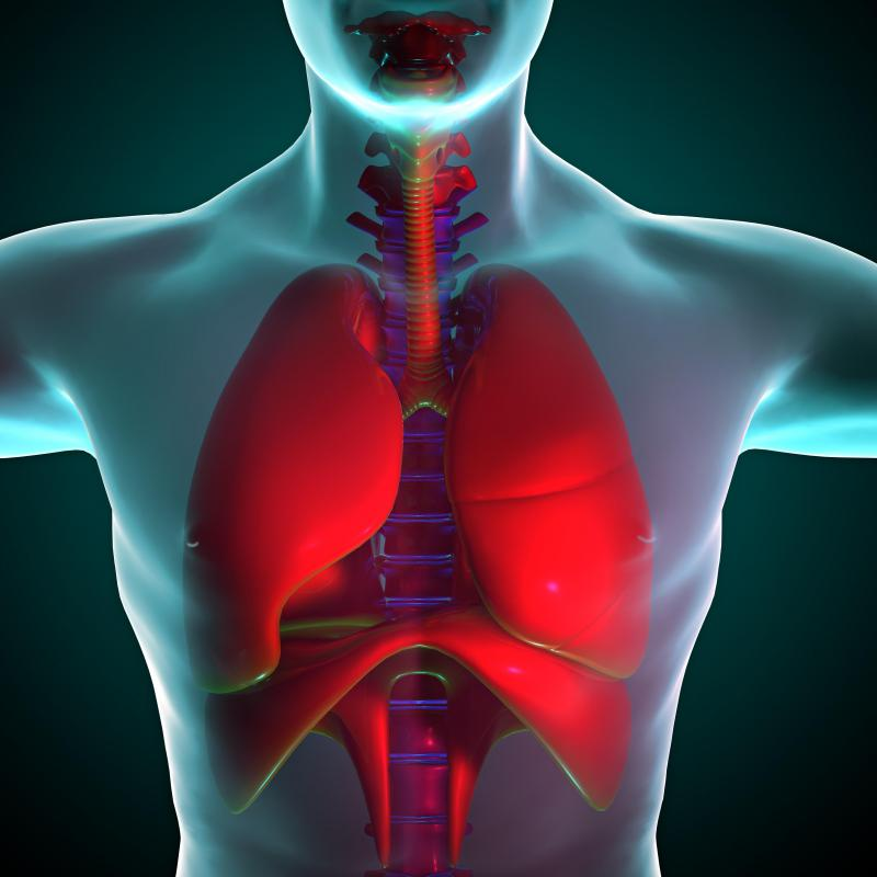 The lungs pull oxygen from the environment and transport it into the bloodstream.