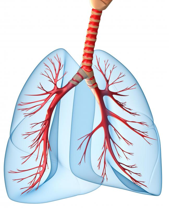 Tidal volume is the amount of air normally breathed into and out of the lungs.