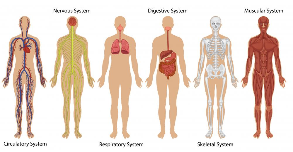 Systems of the human body.