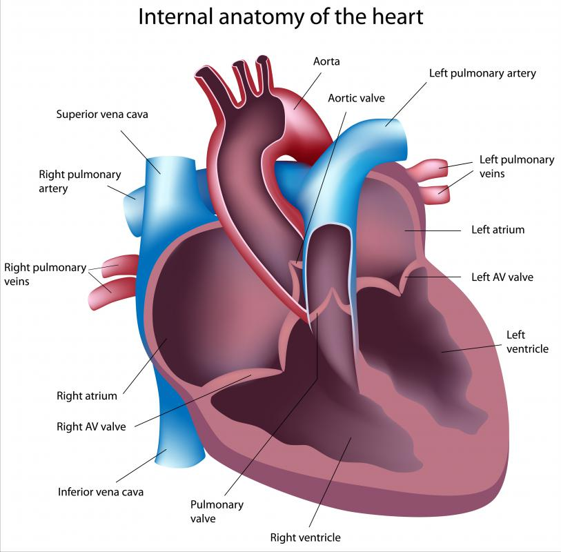 Patients with atrial fibrillation have an abnormal heart rate.
