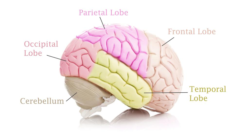 Encephalomalacia refers to a medical condition characterized by cerebral softening.
