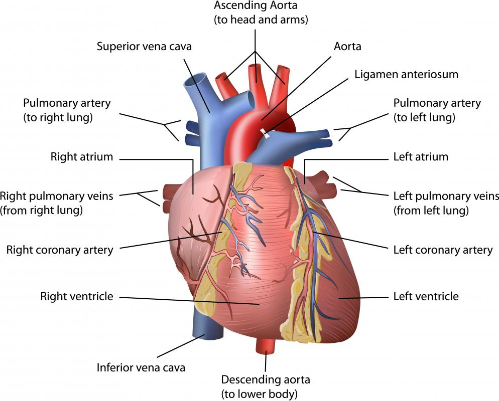 Atrial fibrillation is a condition that involves an arrhythmia, or an abnormal heartbeat.