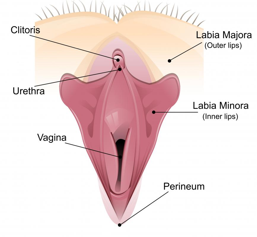 A vaginal dilator is used to enlarge the vagina.