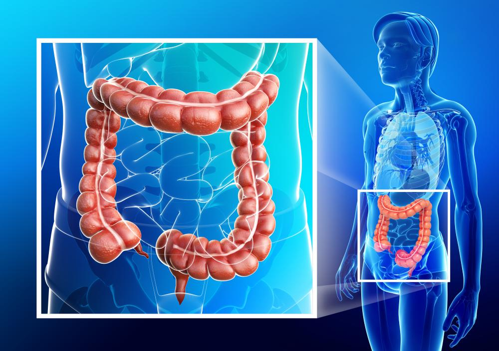 In the large intestine, intestinal mucosa is involved in extracting water.