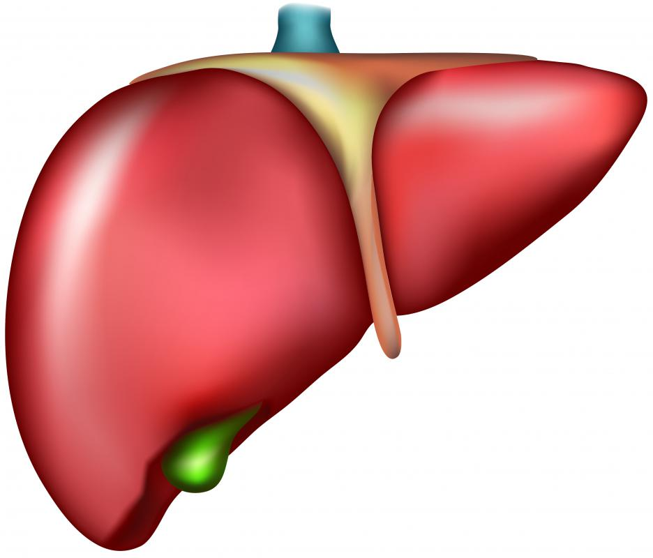 The liver's role in the excretory system is to rid the body of cholesterol and toxins.