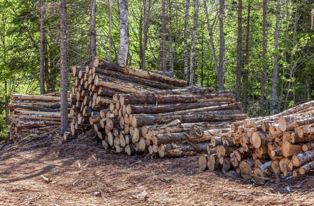 The Hupa Indian tribe has many commerical interests, including timber logging.