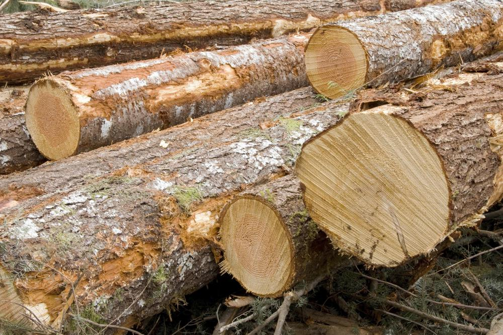 A pile of green lumber that has not been chemically treated.
