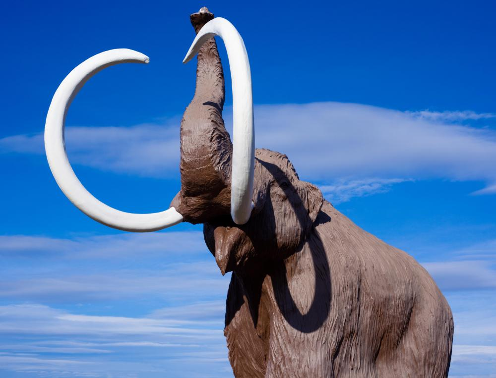 The Clovis people hunted, killed, and ate mammoths.