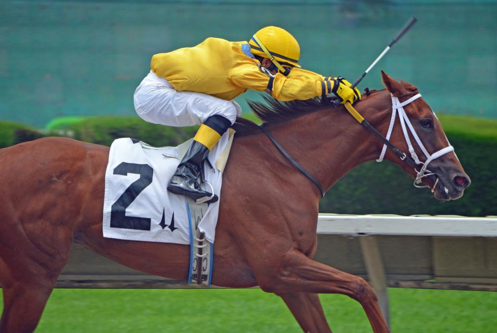 A thoroughbred must be registered with the local jockey club, which keeps track of all bloodlines and winnings.