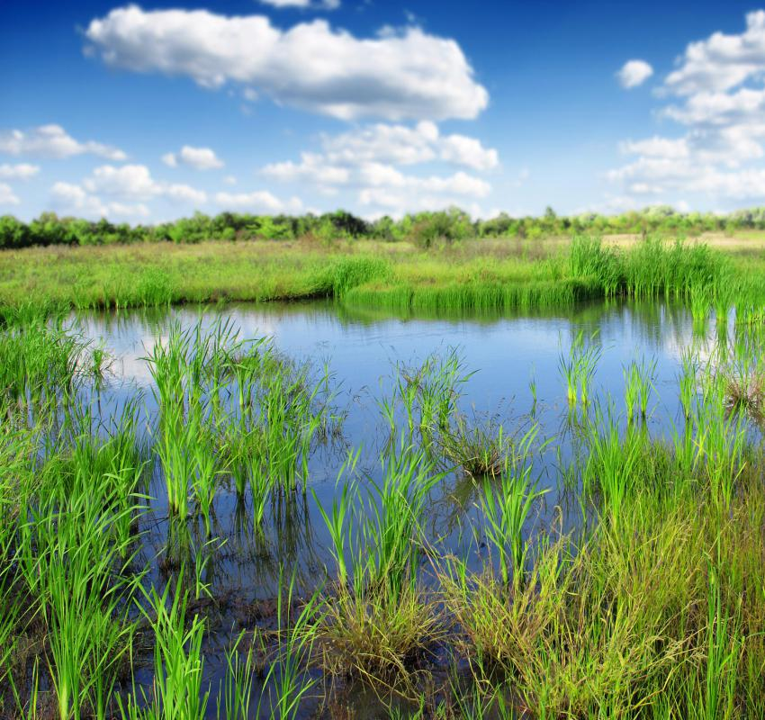 Formula grants might include funding to preserve wetlands.