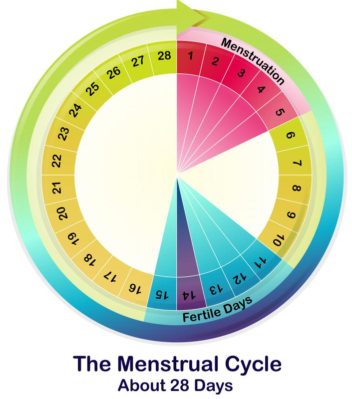 The cervix changes position at various times during the menstrual cycle.