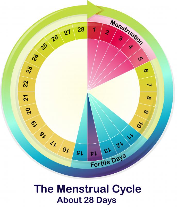 The normal female menstrual cycle usually lasts 28 days.