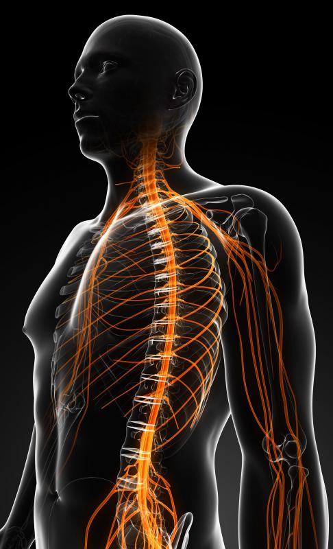 Many scientists believe that there is great potential in stem cells to one day treat spinal cord injuries.