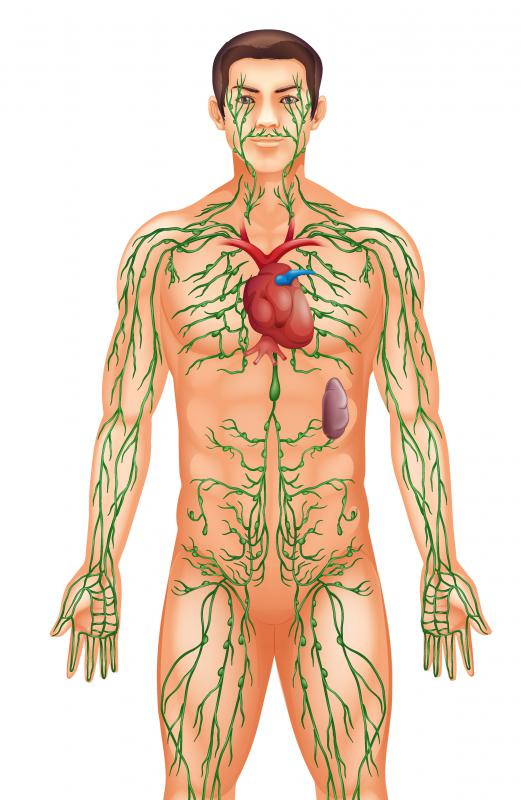 The lymphatic system is the main component of the immune system.