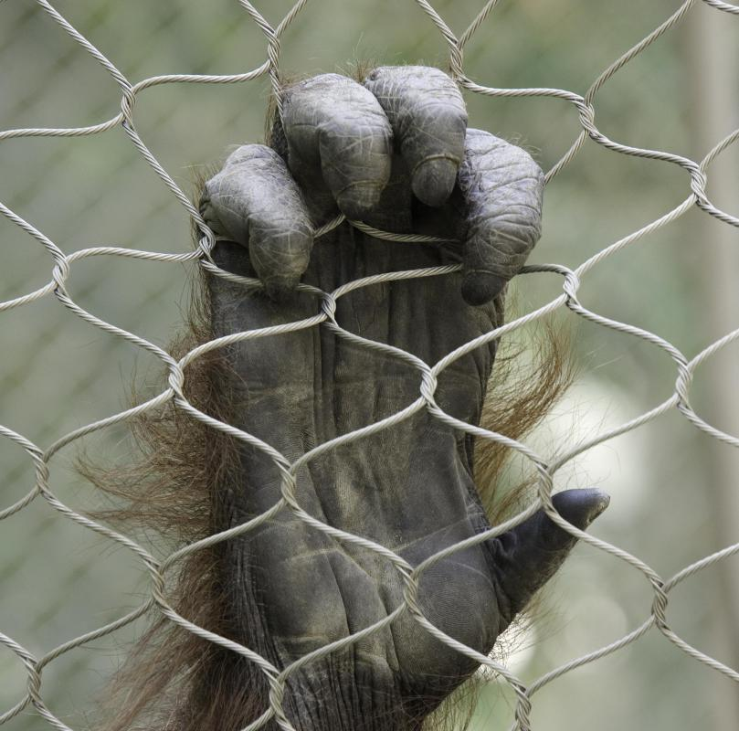 One of the defining characteristics of a primate is having five fingers and five toes.