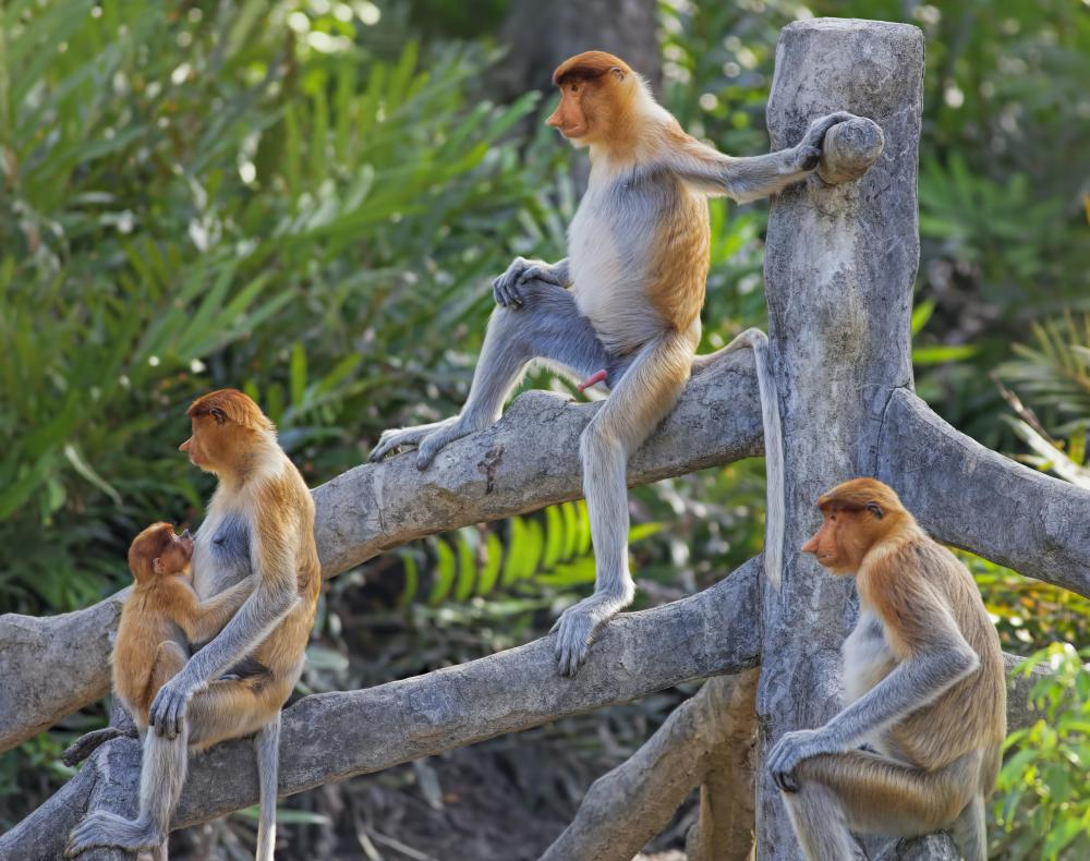 Primates are humans' closest living relatives.