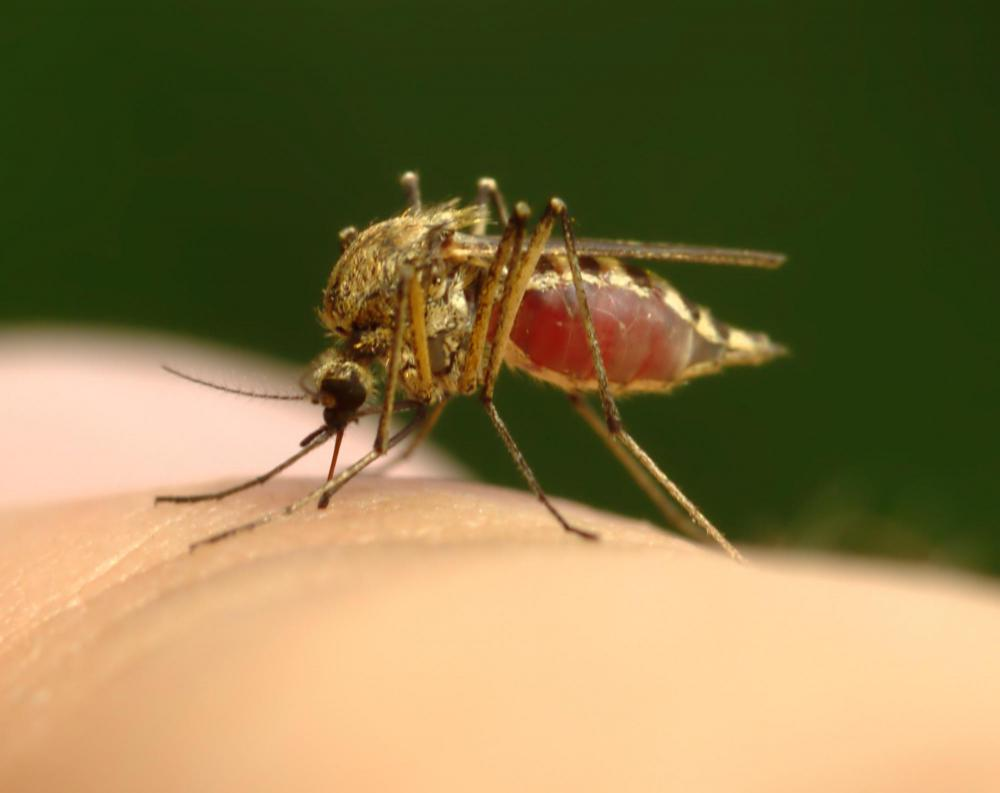 A mosquito weighs about 2 milligrams.