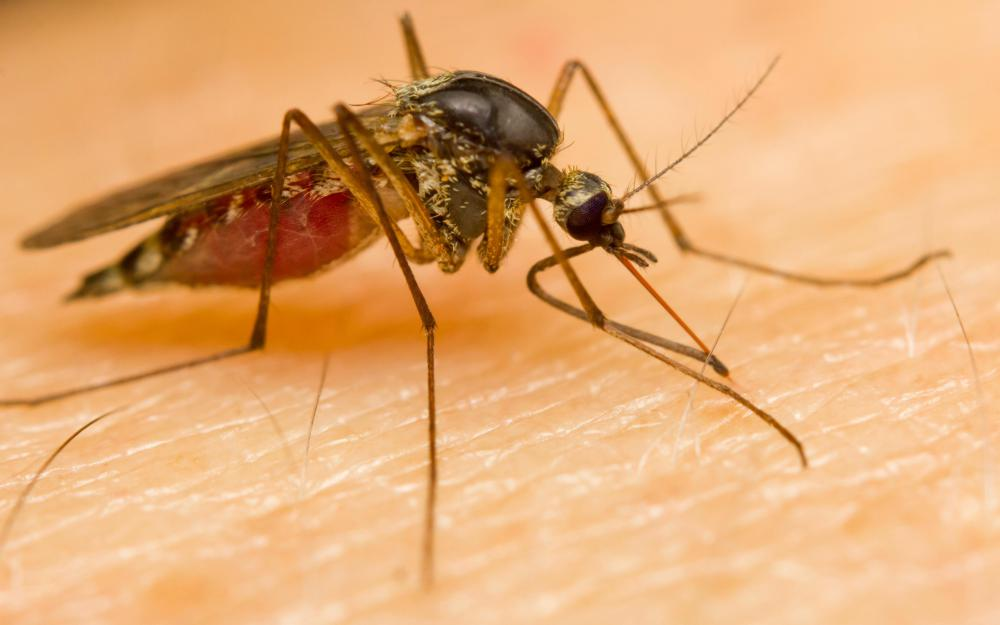 Malaria is a significant problem in Nigeria.