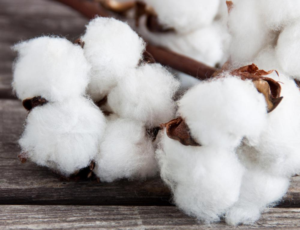 Cotton is often used in the manufacture of clothing.