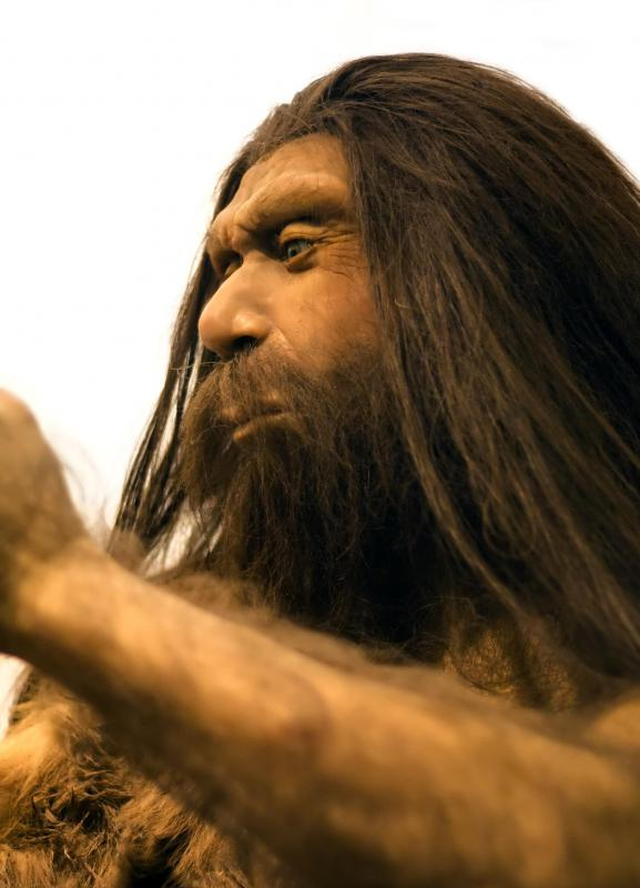 Neanderthals evolved to survive in the harsh climate of the European Ice Ages.