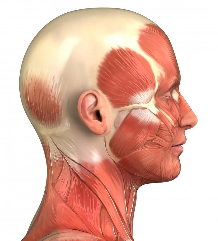 Sternocleidomastoid muscles are a set of muscles in the neck which assist in breathing.