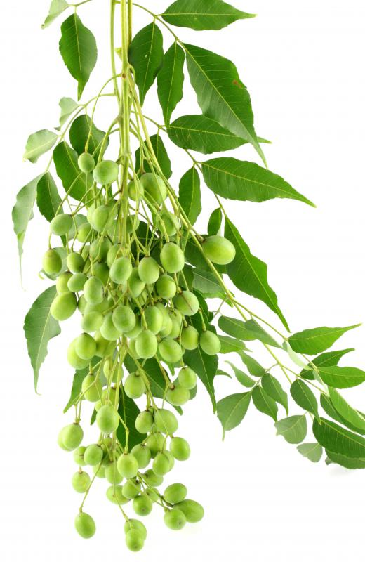 Oil derived from the neem tree is often used in natural pesticides.
