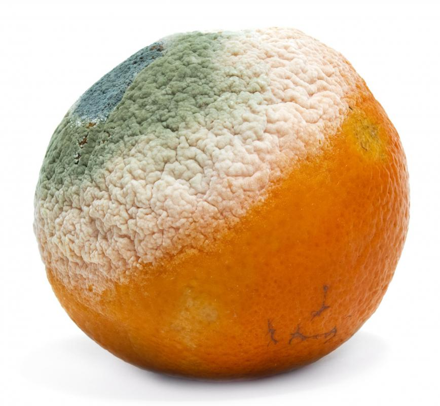 An orange with mold on it.