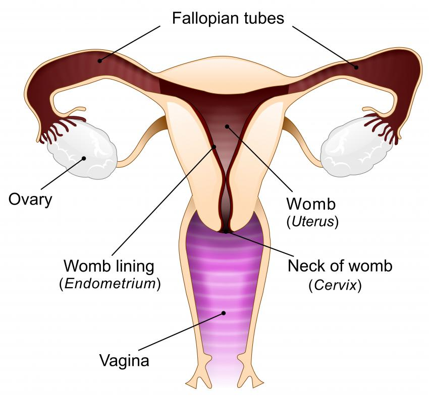 A few days after conception, an embryo reaches the uterus, where it implants itself in the lining of the uterus.