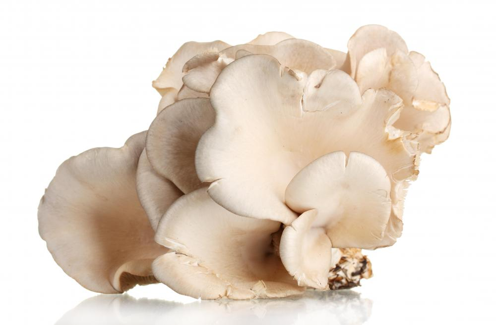 Mushrooms, like the oyster, reproduce through spores.