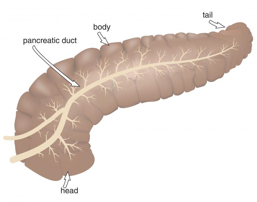 The pancreatic duct, which introduces bile and pancreatic juice into the small intestine, is directly connected to the descending duodenum.