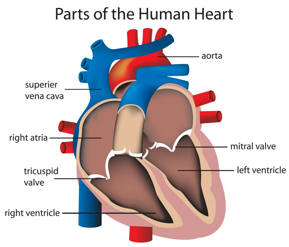 Mitral valve prolapse can produce chest pain and fatigue in some individuals.