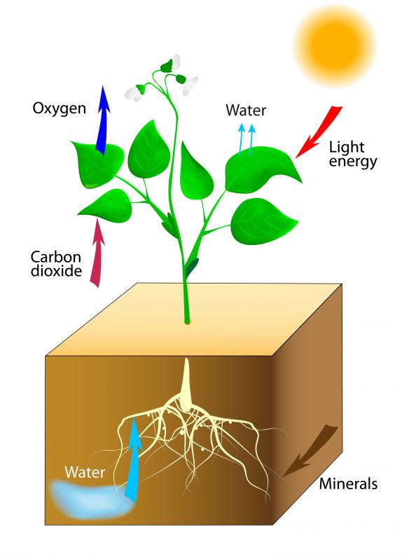 Carbon is continuously being absorbed in the process of photosynthesis, which uses carbon dioxide to create carbohydrates.