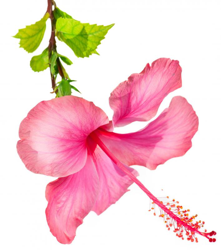 A conditioner with hibiscus can help repair damaged hair.