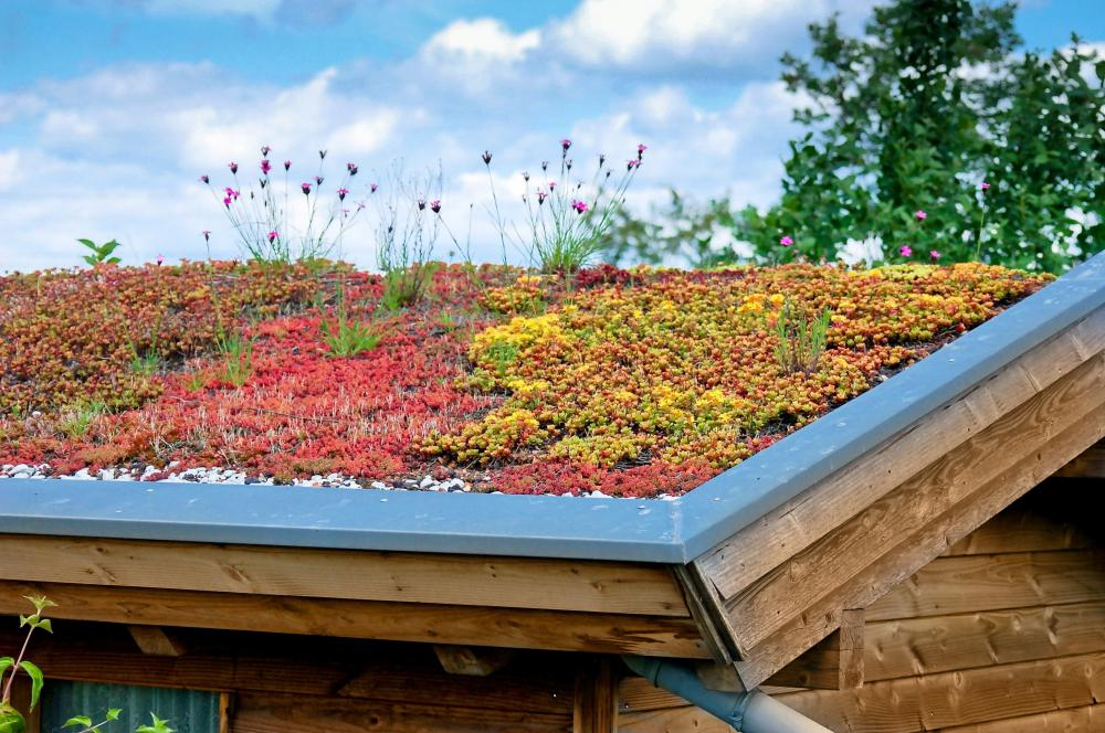 Eco homes may feature a green roof, which is covered with vegetation.