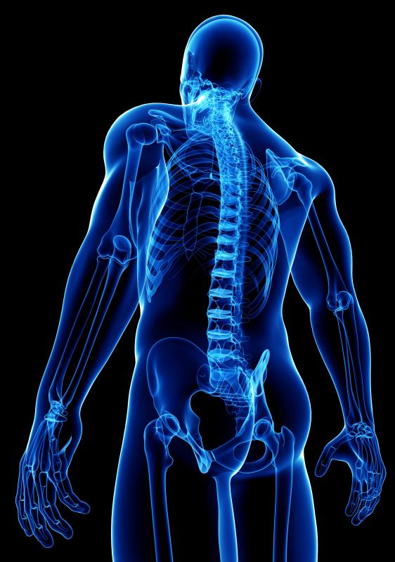 Connective tissue joins bones and muscles to one another and holds tissues in their proper place.