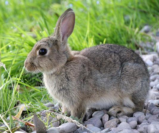 """Rabbit starvation"" is another term for protein poisoning. It refers to the effects of a diet entirely composed of lean game meat, such as rabbit."