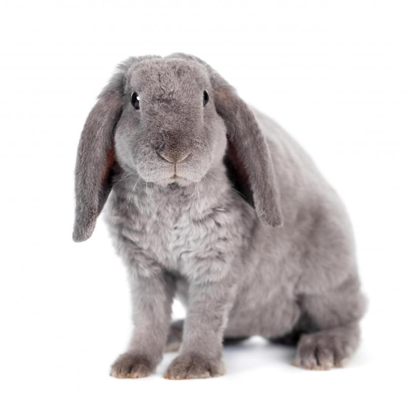 In many cultures, including those of the Chinese and Celts, rabbits were associated with prosperity and luck.