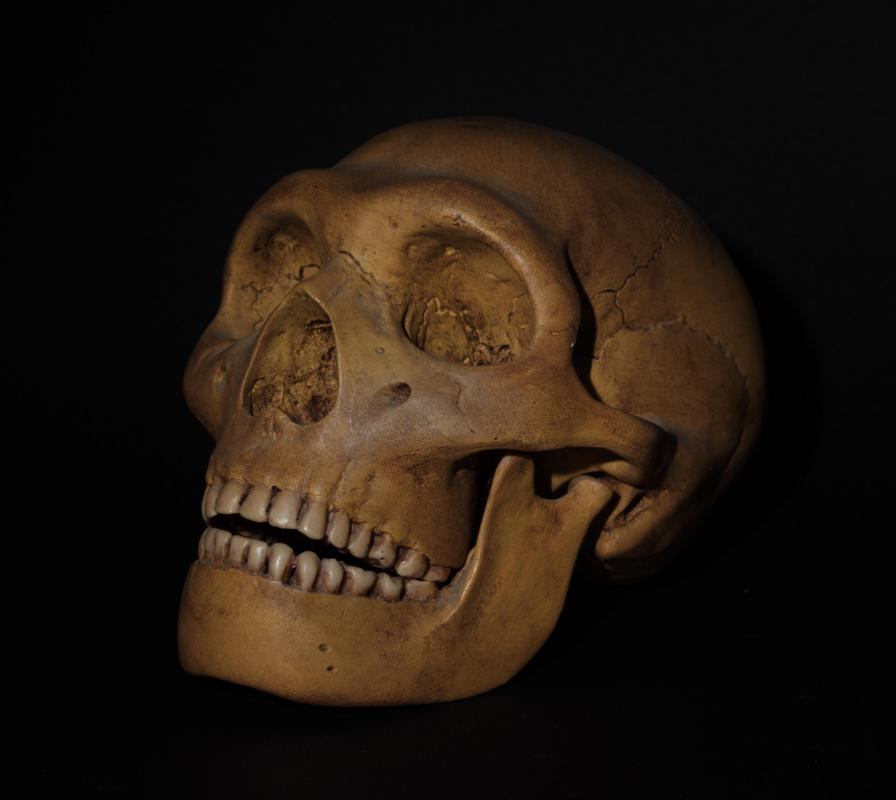 The smaller braincases of extinct species such as Homo erectus indicate that they had a far less developed prefrontal cortex than modern Homo sapiens.