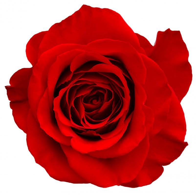"""My love is a red rose"" is an example of a metaphor."