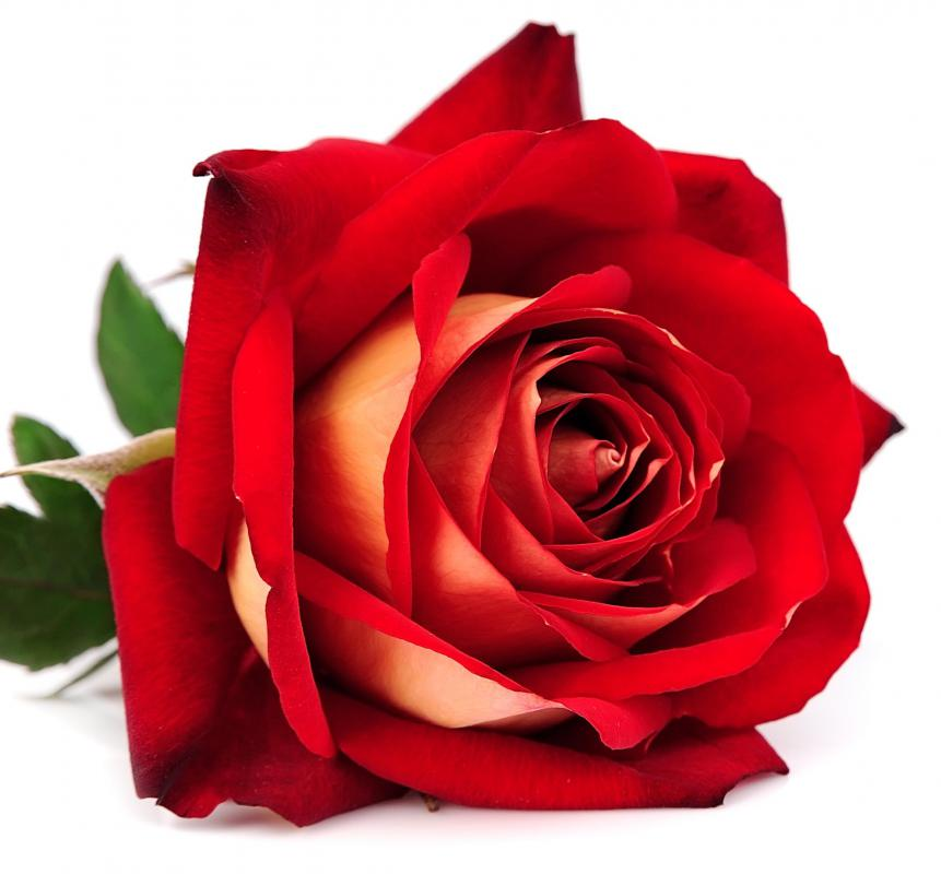 """His love is like a red rose,"" is an example of a simile."