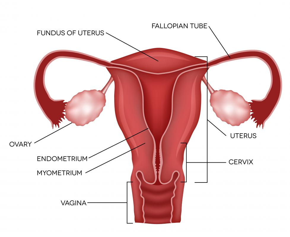 Abnormal growth of the lining of the uterus may cause vaginal blood clots.