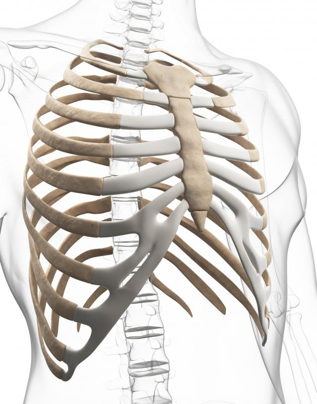 The xiphoid process lies at the base of the sternum.