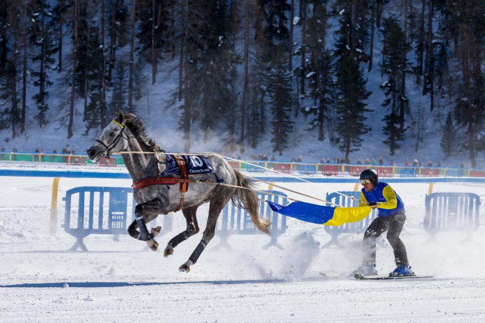In skijoring, a skier is pulled behind a horse or a team of dogs.