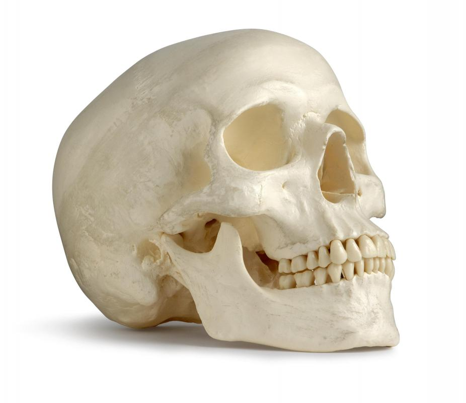 The facial bones are a group of bones in the skull that make up the skeleton of the face.