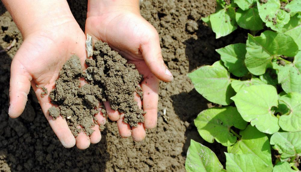 Knowing the acidity level of soil is helpful because certain plants require different levels.